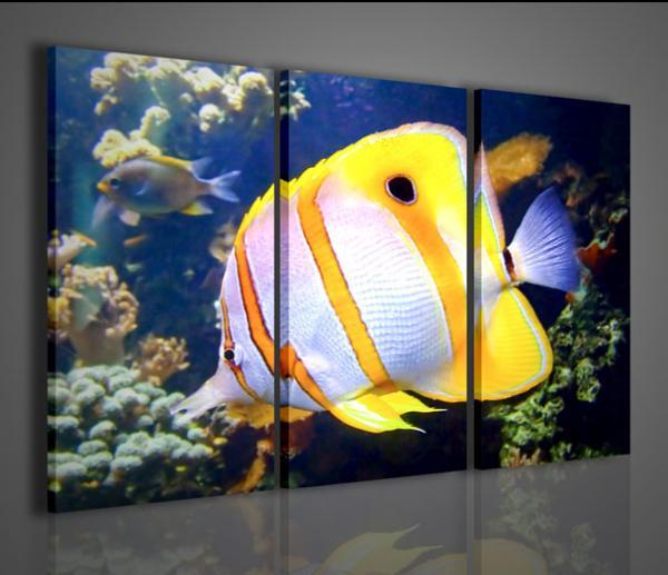 Quadro acquario marino per arredamento casa oppure negozio for Arredamento acquario