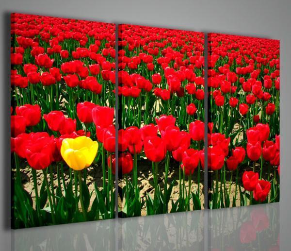 Quadri moderni quadri di fiori e piante singular tulips for Quadri di fiori